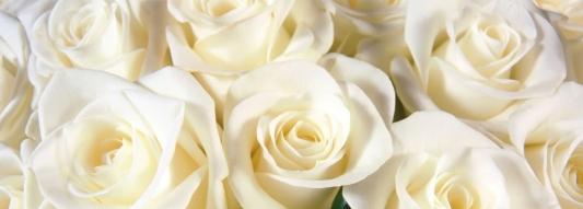 white-rose-hd-wallpapers.jpg