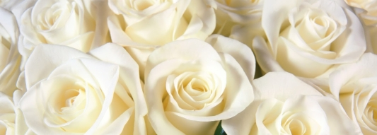 white-rose-hd-wallpapers.jpg