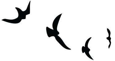 0854JO-Birds-Flight-636x350