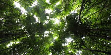 maui-bamboo-jungle-plants-wild.jpg